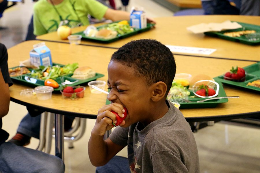 Elementary school student bite into a pepper.