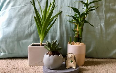 Six reasons why plants make the best friends