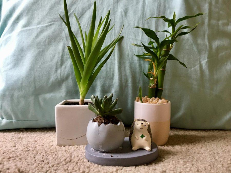 The writer's various plants sit on display.