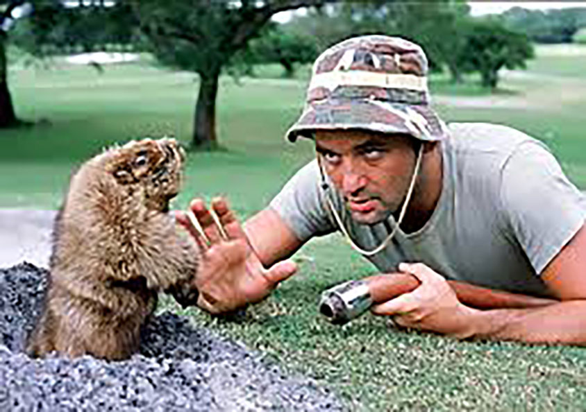 One+of+the+iconic+scenes+from+the+movie+%22Caddyshack%22%2C+as+the+groundskeeper+of+the+golf+course+attempts+to+catch+the+ever-elusive+gopher.