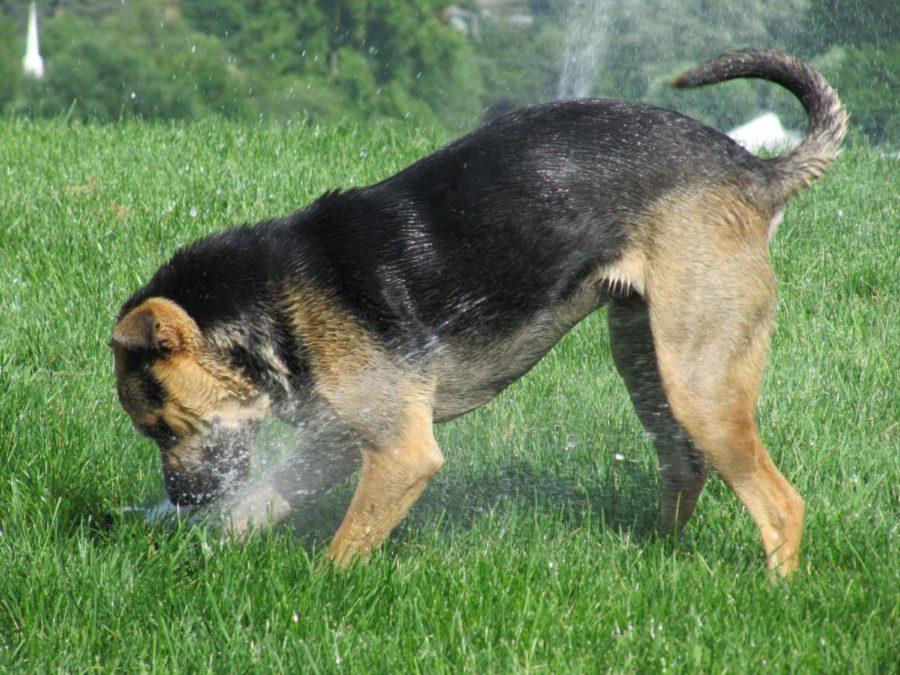 Dogs+prove+loyal+friends