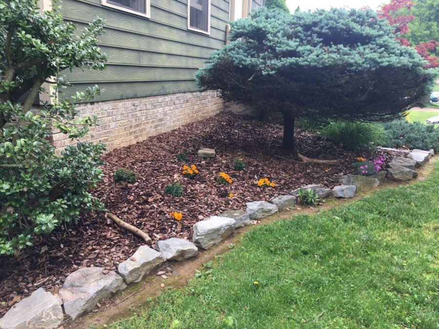 Lankford planted new flowers and removed the  sheet covering the ground to protect it from a previous frost warning.