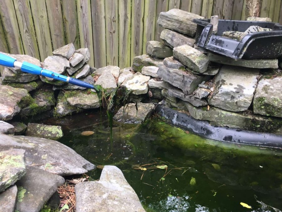 Junior Emma Lankford is able to spend more time working on outdoor projects with her time in quarantine. Her first project was fixing their outdoor pond.