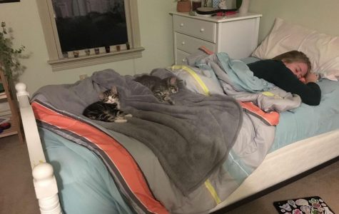 Senior Emma Lankford has two kittens named Cosmo and Luna, here they are sleeping on her bed. She adopted from the owner of the Lady Jane, who was fostering them from the Cat's Cradle.