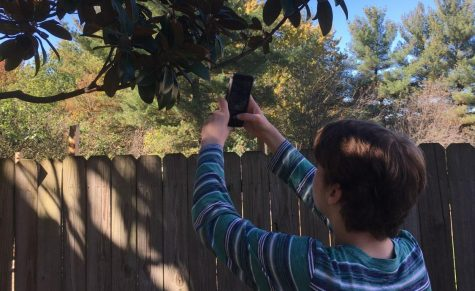 Freshman William Deloney taking a picture of his tree.